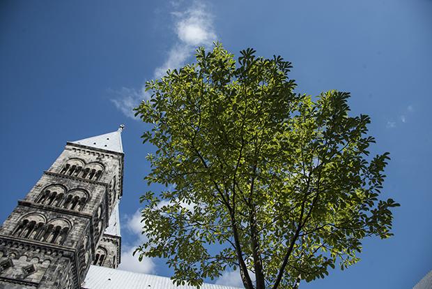 domkyrkan_träd