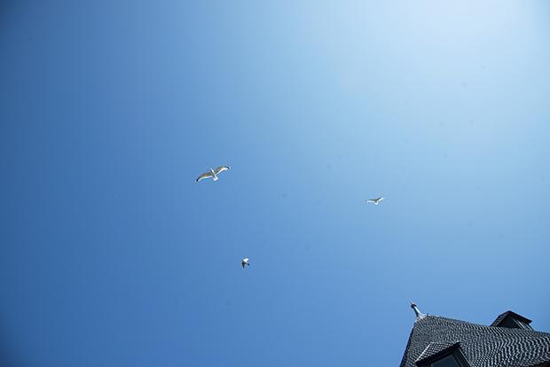 fåglar_himmel
