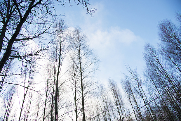 träd_himmel